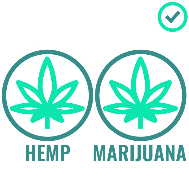 1_Massachusetts is one of the few states where CBD Oil made from Hemp and Marijuana are both legal.