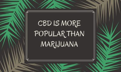 CBD is More Popular than marijuana