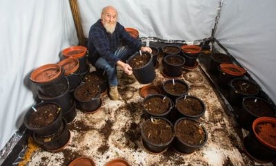 Pensioner arrested for growing cannabis
