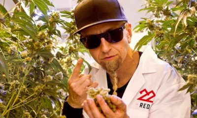 System of a Down Bassist's Cannabis Brand Launches in Arizona